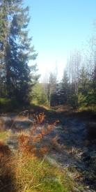 A fine October morning