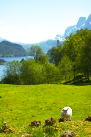 Fjord, Grass, Mountain and Wool!